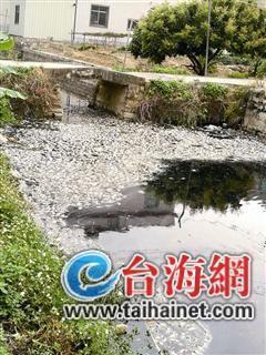 阳光木工培训学校创业指南培训学校分享死鱼蔓延多少公里 漳州一河