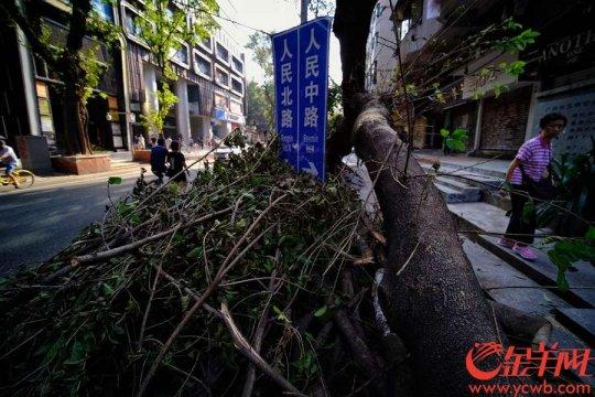 阳光木工培训学校木工天地培训学校分享光影老树残骸:西关美,商洛